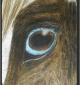 2015_10_04_Pferd
